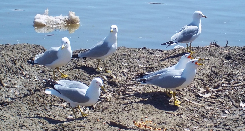 a flock of vocables